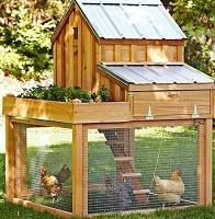 zelf een kippen ren bouwen